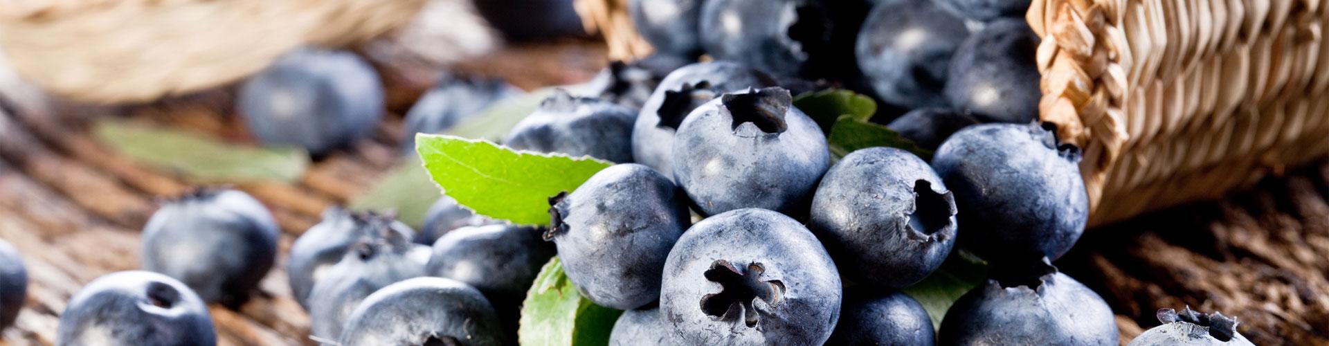藍莓種植基地